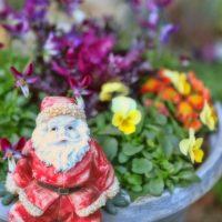 クリスマスの寄せ植えはテーマとカラーが大切!おすすめの植物を紹介