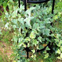 100均で作る観葉植物の寄せ植え!選び方やおしゃれに作るための植物選びのポイント
