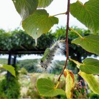 毛虫を駆除するときは毒に注意!安全に処理する方法や予防方法まとめ