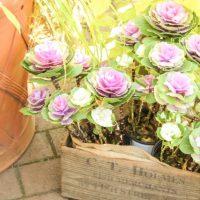 寄せ植えで玄関に彩りを加えよう!道具選びのコツやおすすめの植物を紹介
