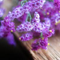 切り花やドライフラワーに最適!スターチスの育て方【花言葉と栽培管理】