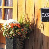 秋の寄せ植えは色のバランスに気を付けよう!【秋らしい寄せ植えバスケットの作り方】