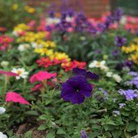 花壇で寄せ植えをして四季を楽しもう!季節ごとにおすすめの植物を紹介