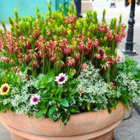 寄せ植えは鉢選びも重要!鉢の選び方や見栄えを良くするコツを解説