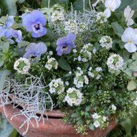 冬の寄せ植えは長持ちする花を選ぼう!おすすめの花とおしゃれに見せるコツ
